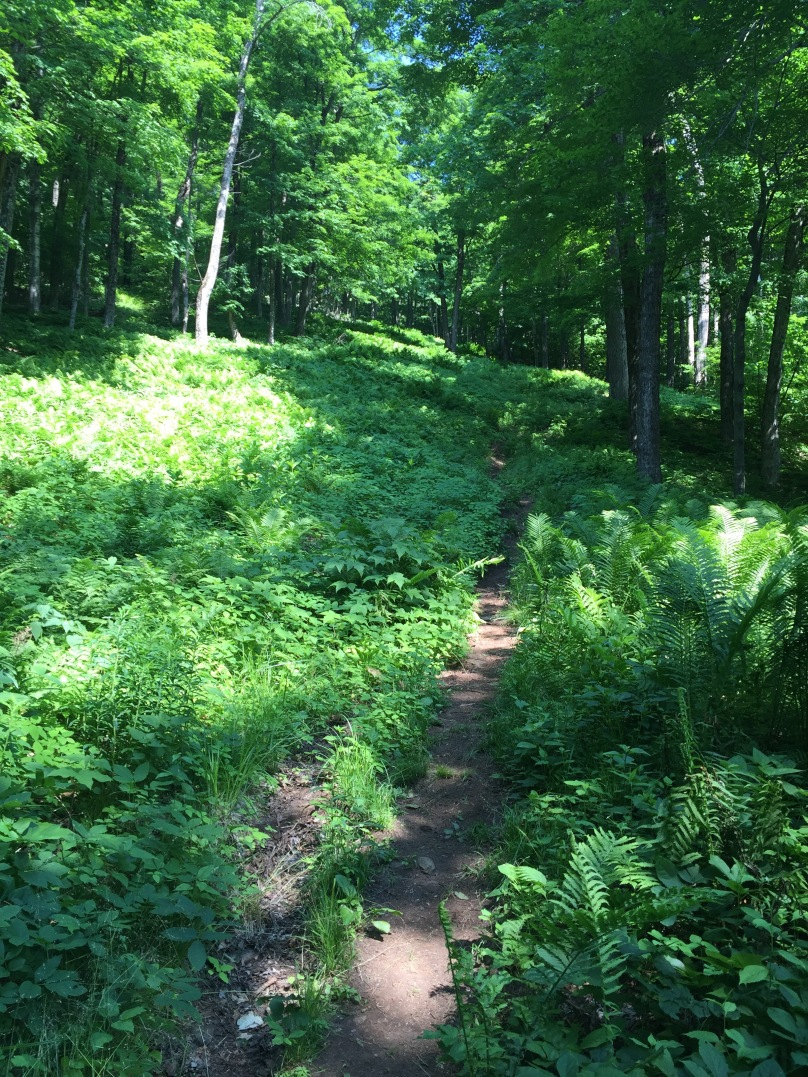 Thunderbolt Trail